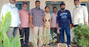 ಅಕ್ರಮ ಗಾಂಜಾ ವಶ