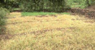 ಬೀದರ್: ನಗರದ ಕೊಳಚೆ ನೀರಿನಿಂದ ಮಲಿನವಾದ ಭೂಮಿ; ತರಕಾರಿ ಬೆಳೆಯಲಾಗದೆ ಕಂಗಾಲಾದ ರೈತರು